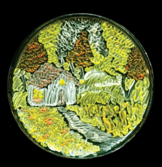 Agar Art Winner 2015 3