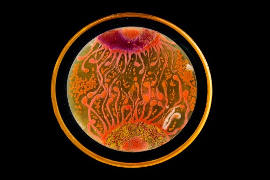 Agar Art Winner 2015